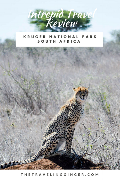 INTREPID TRAVEL REVIEW SOUTH AFRICA KRUGER PARK