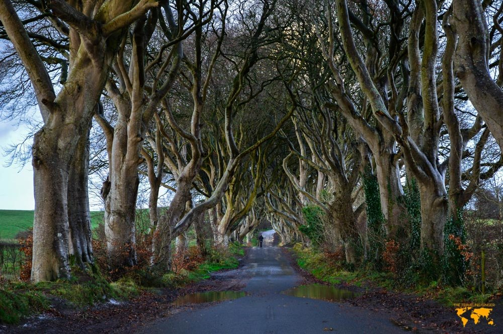 Travel to Ireland: The Dark Hedges
