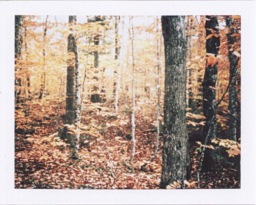 newengland_polaroid_3.png