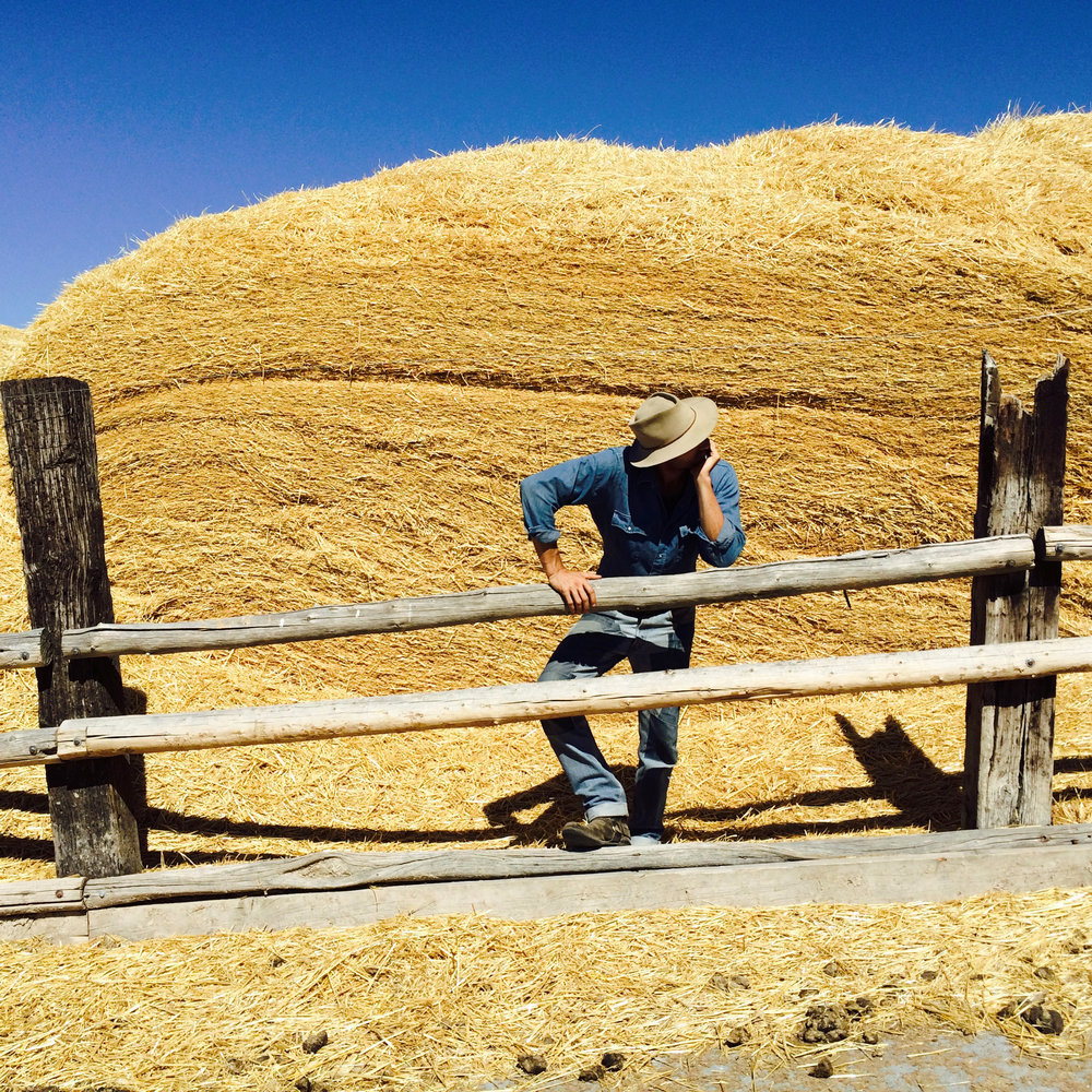 fencey.jpg