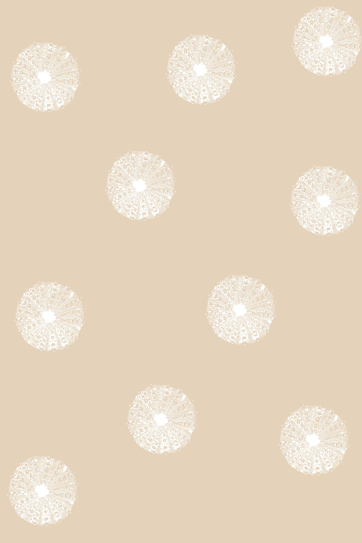 seaurchin_wallpaper_sandwhite.jpg