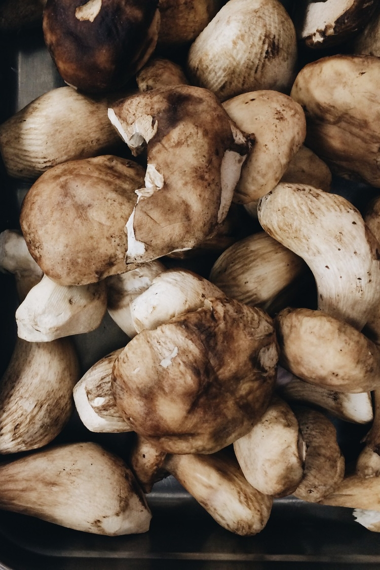 Fresh funghi porcini at Via Carota, where cherished downtown chefs Jody Williams and Rita Sodi cook deeply appealing Italian food, honoring their local markets and farms from one season to the next.