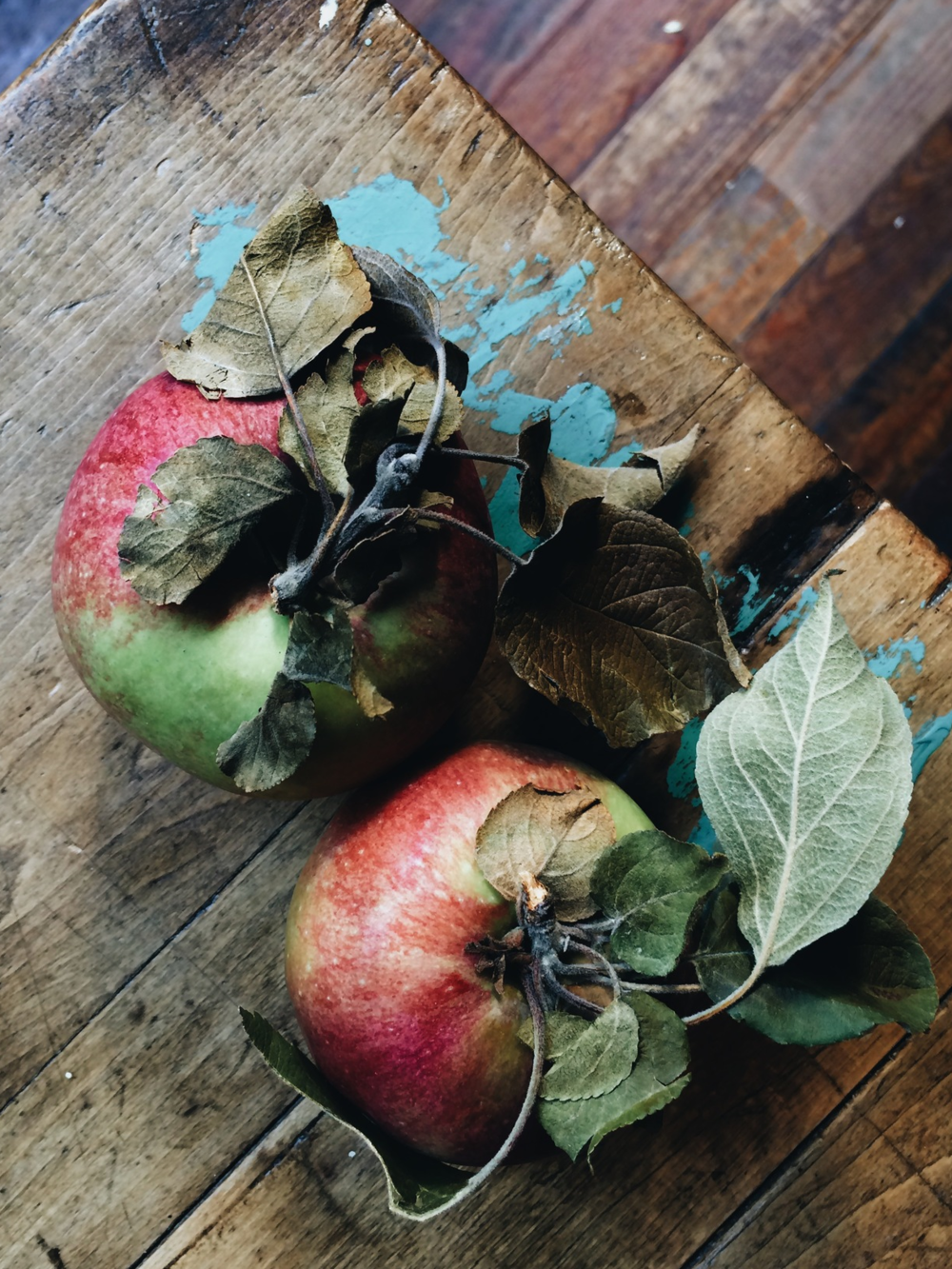 Local farm-fresh apples at Via Carota, where cherished downtown chefs Jody Williams and Rita Sodi cook deeply appealing Italian food, honoring their local markets and farms from one season to the next.