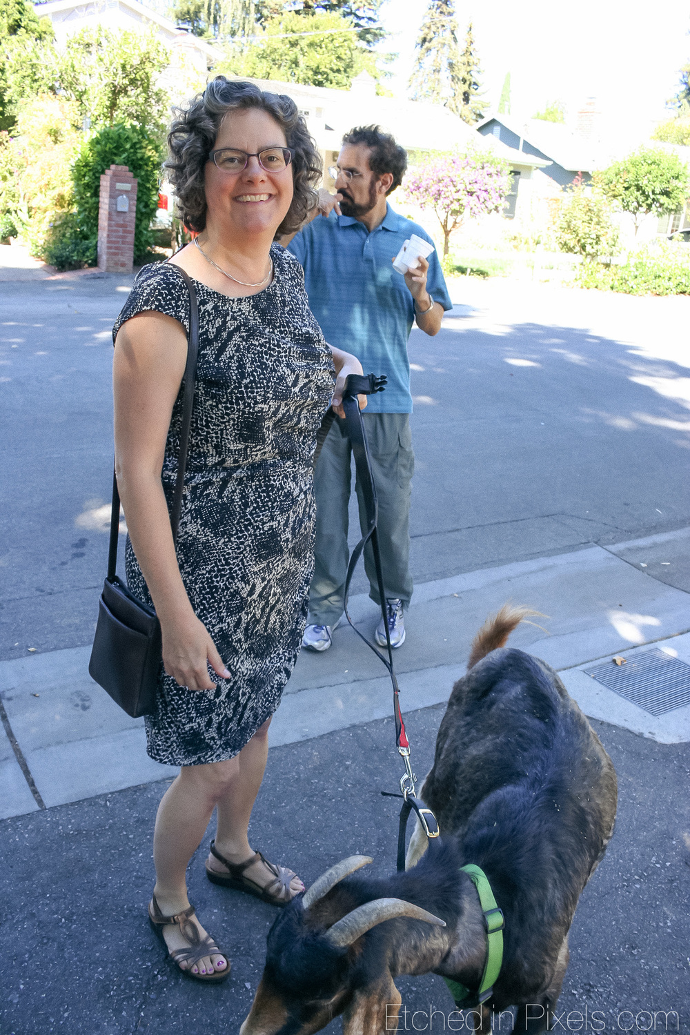 Woman stands holding a goat by the leash.