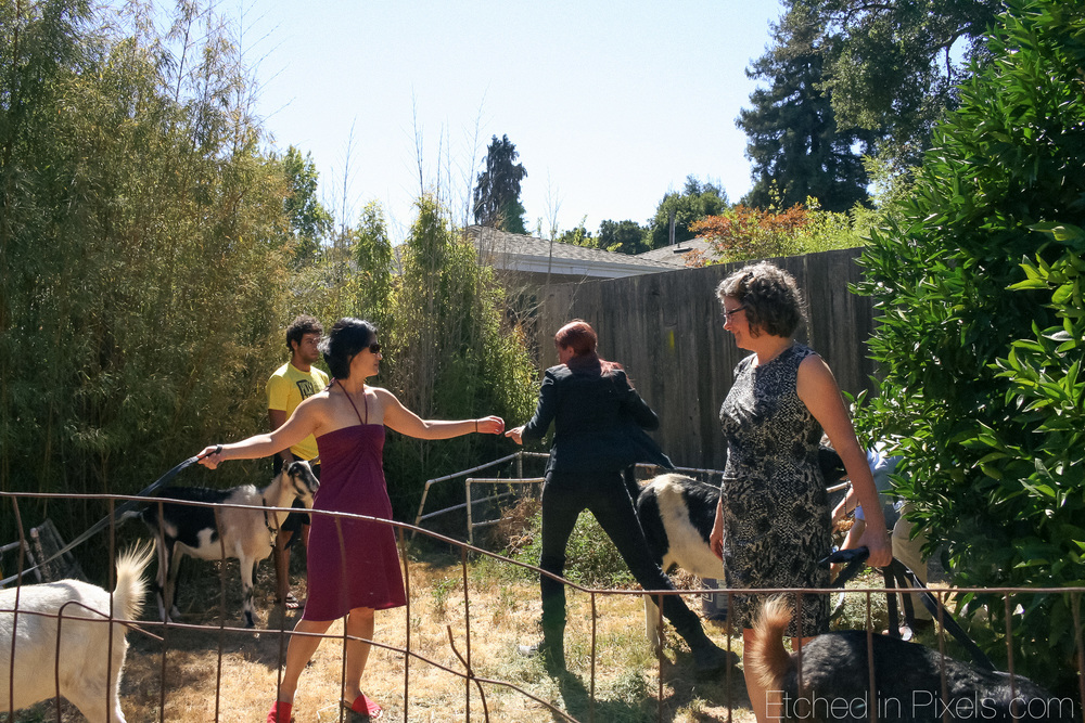 Women and goats in the backyard.