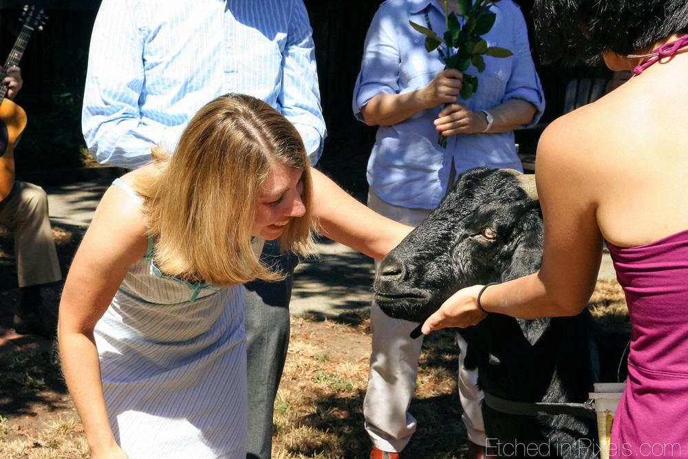 Woman pets goat.