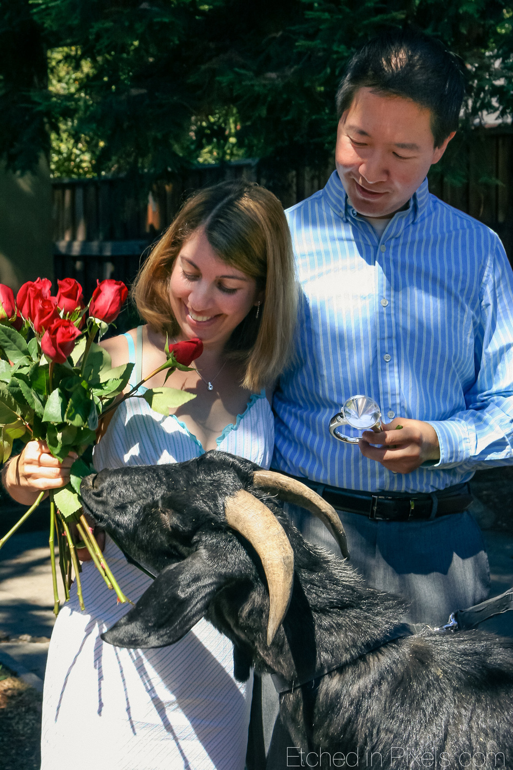 Goat eats roses from woman's hand.