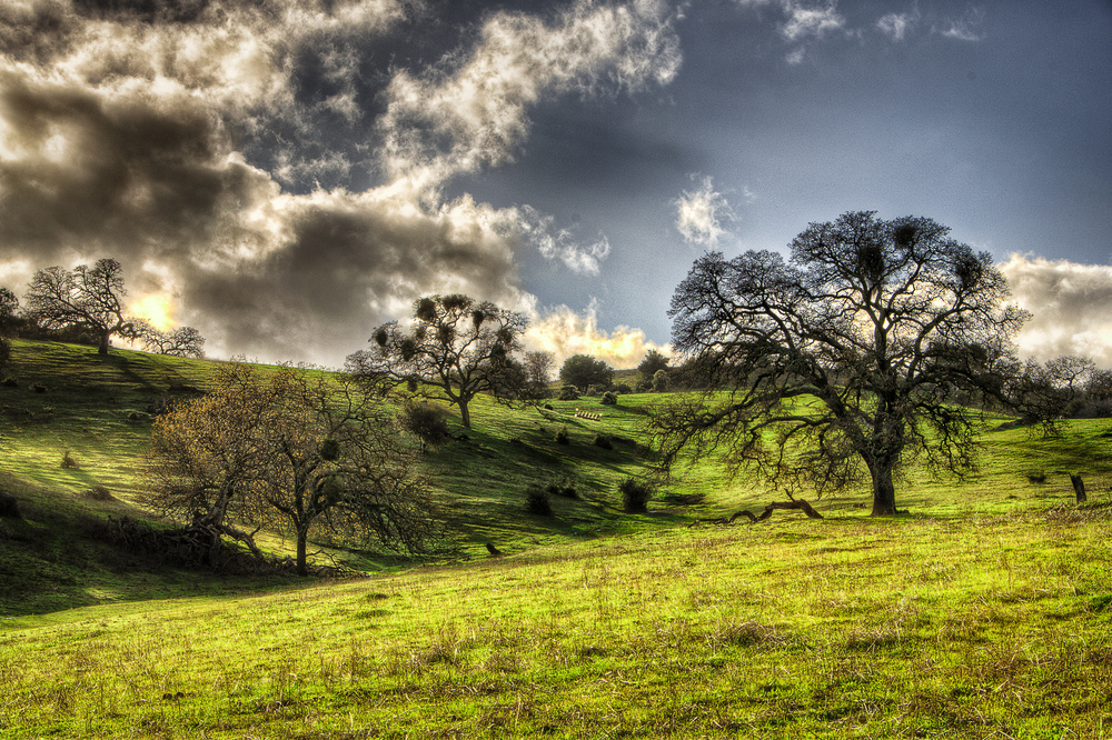 Shadows Across a Meadow II
