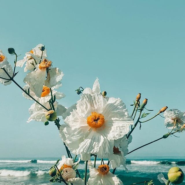 Crisp and clear oceans and some beautiful blooms never fail to make us smile. Hope you've had the best weekend beauties!⠀ ⠀ 📷 via @ariellevey