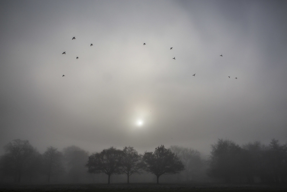 U.K. London - Misty morning in Richmond Park.