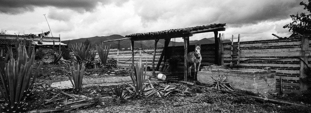 Oaxaca, Mexico - A palenque in Matatlan, Oaxaca, 2018.