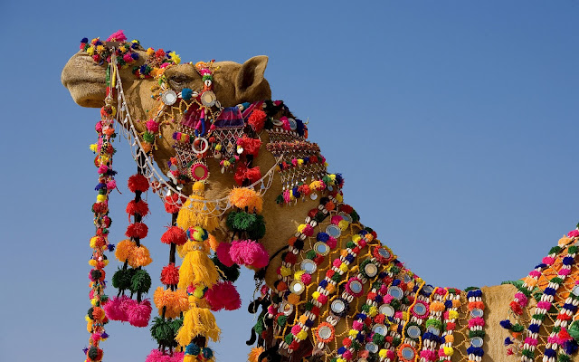 {Even Camels like tassels (and Amber over at Amber Interior Designs)}