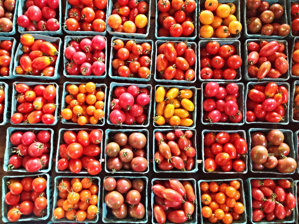 {Gorgeous tomatoes at Hutchins Farm}