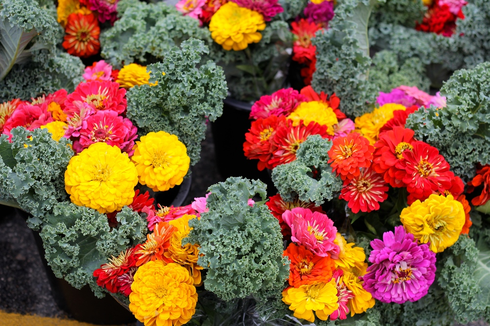 {Flowers and kale. Who knew it would work so well?}