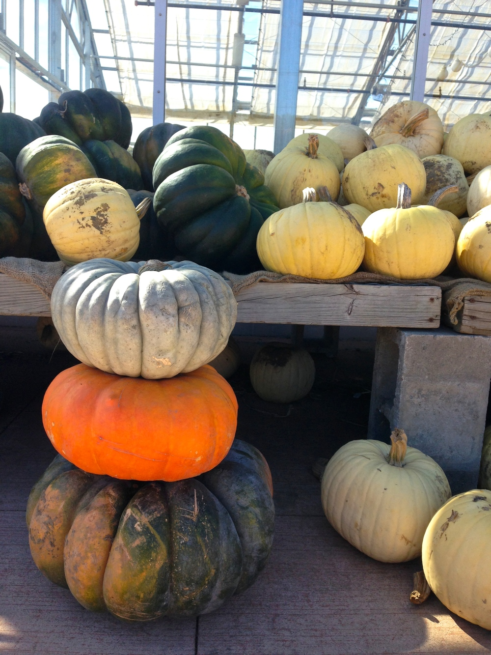 {Stacked pumpkins at Verrill Farm}