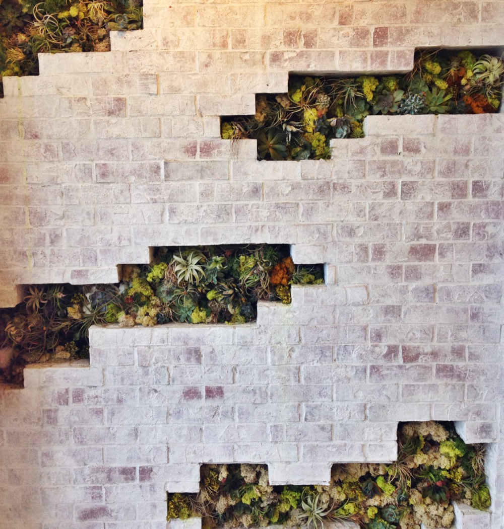 {Cool succulent-filled wall display at Splendid}