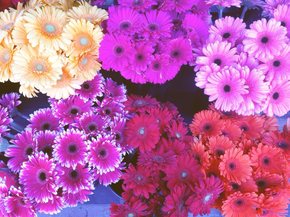 {Fresh flowers have arrived people!}