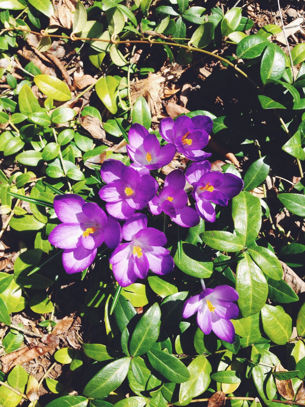 {Flowers in our yard finally starting to pop through.}