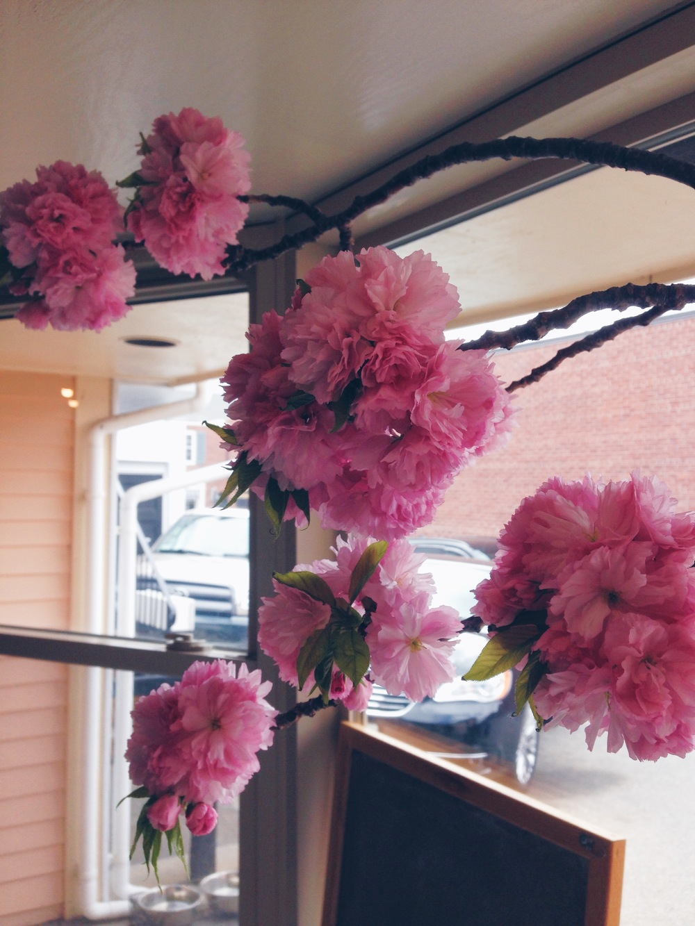 {Beautiful blooms at my favorite local coffee shop, Haute Coffee}