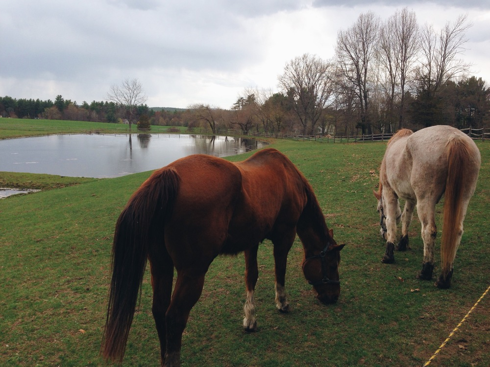 {Visiting my aunt and uncle means saying hi to the horses!}