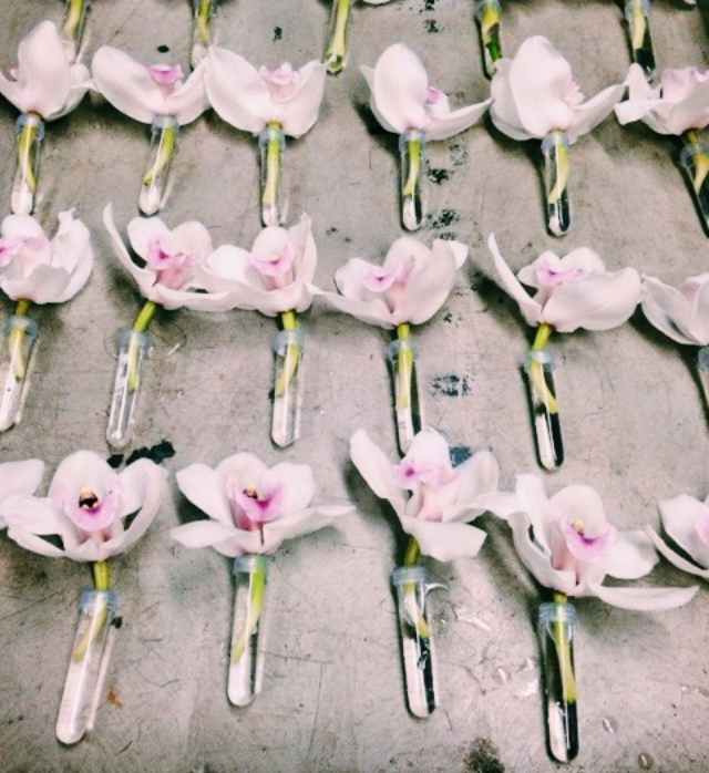 {Beautiful orchids in their own individual tubes}