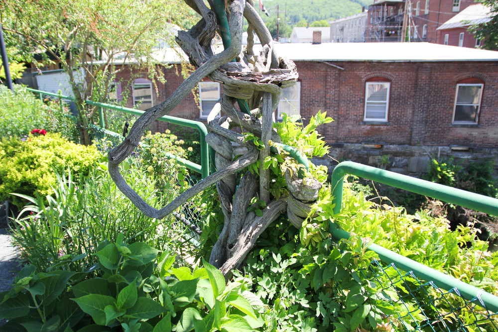 {Vines completely wrapped around the fencing on the bridge}