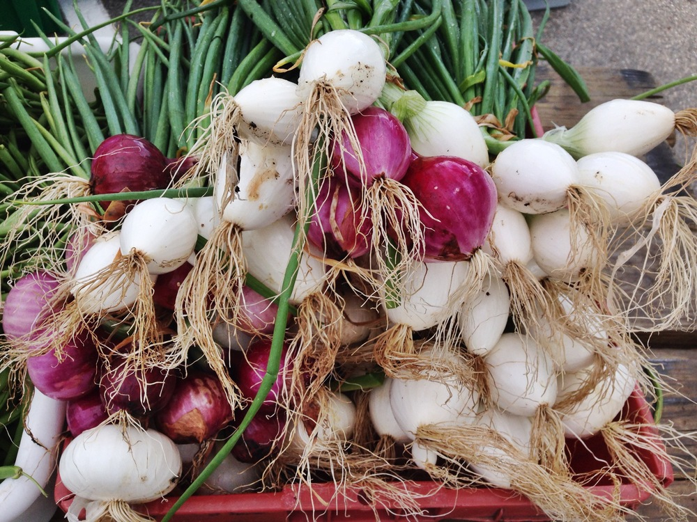 {Some beautiful radishes at the farmers' market}