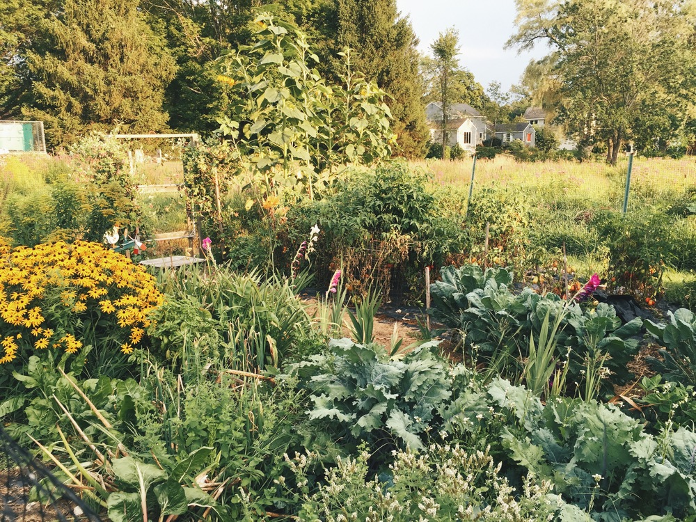 {Our family friend's gorgeous and plentiful vegetable garden}