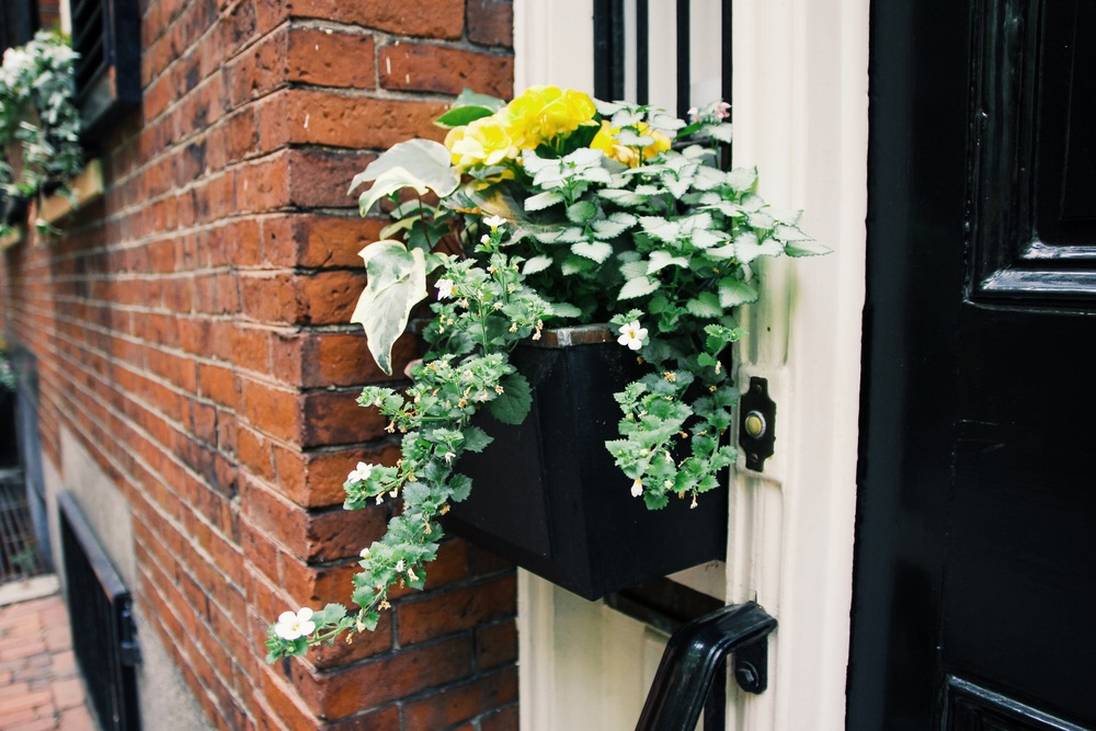 {Adorable little window box in Beacon Hill}