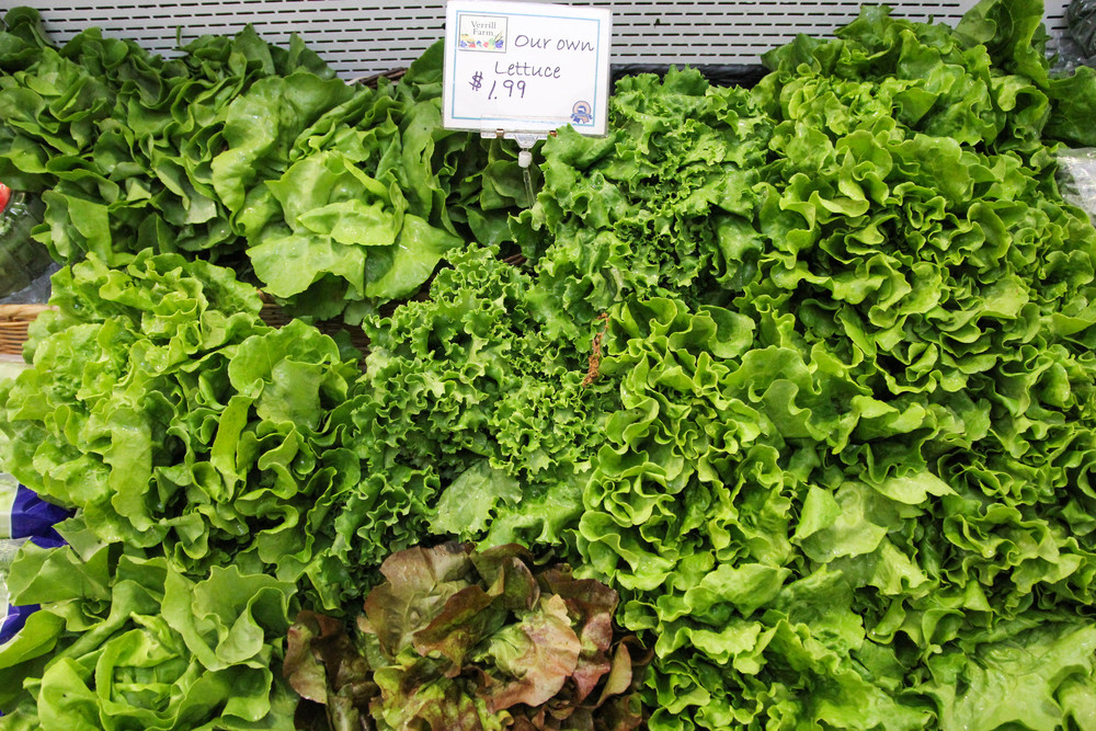 {Fresh lettuce at  Verrill Farm }