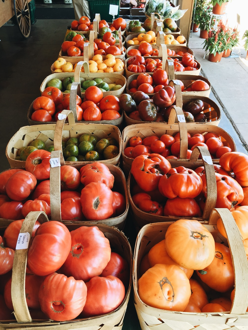 {All of the shades of the tomato rainbow at Verrill Farm}