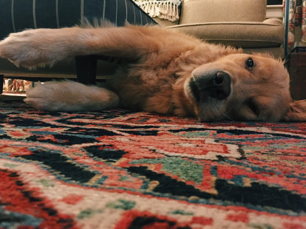 {Bode being a sleepy pup last weekend}
