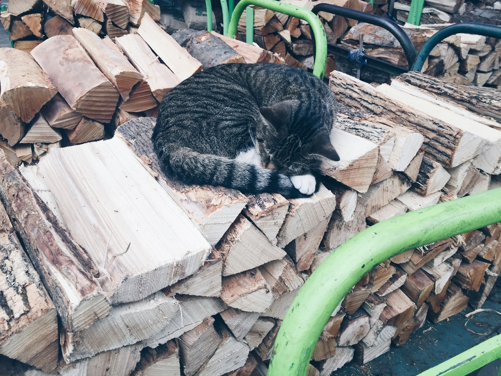 {This adorably cat lives in the garden center and found a very comfortable spot to snooze...}