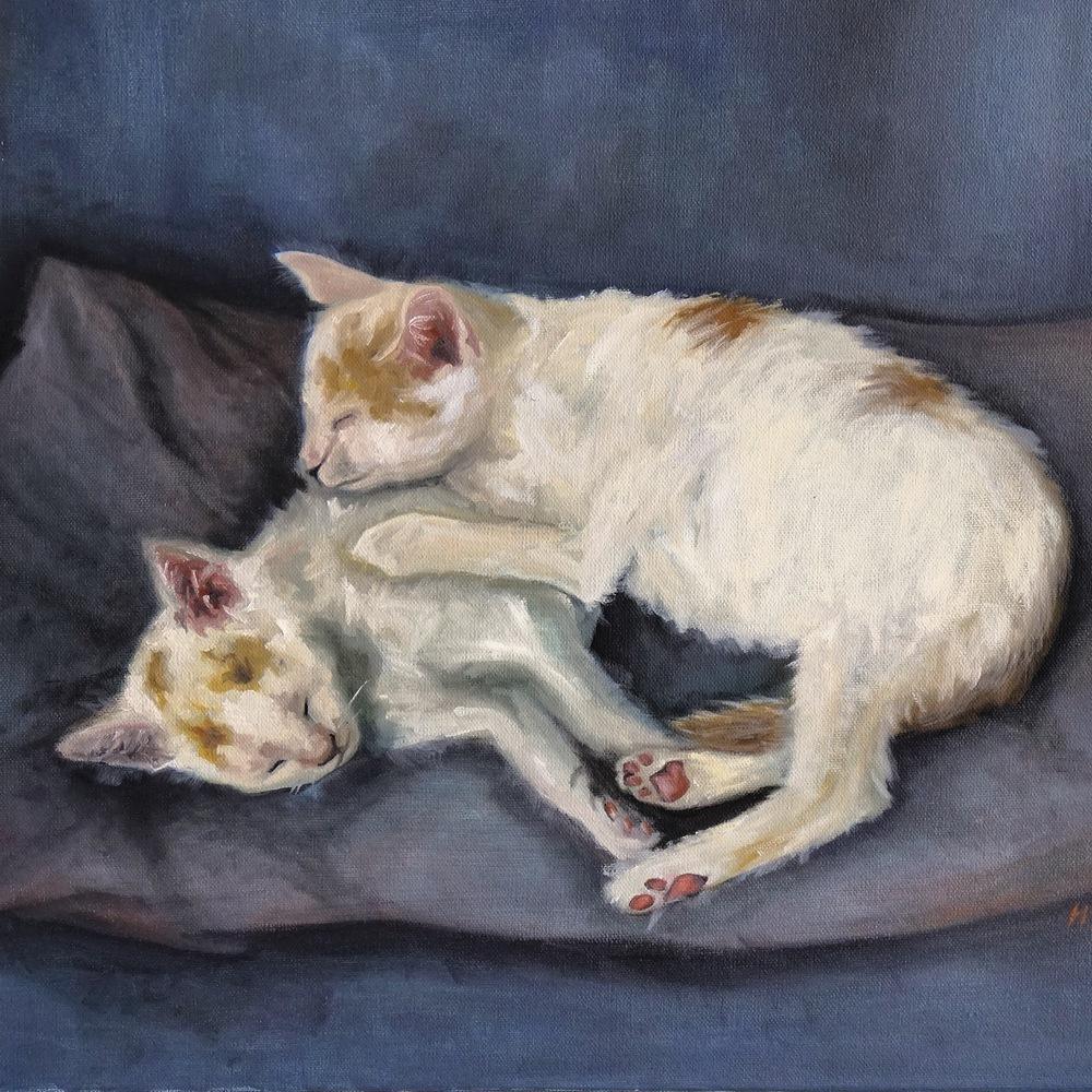 Daniel's Kittens