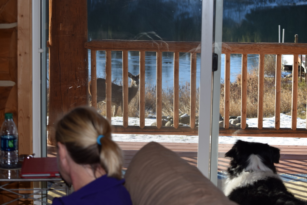 Fiona loves to watch the wildlife.