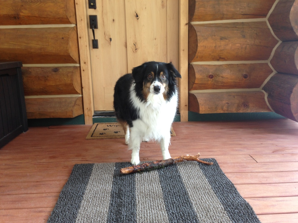 No, you can't bring your stick in the house!