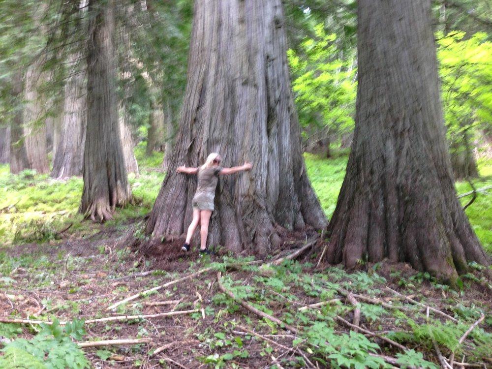 Big hug for a big tree!