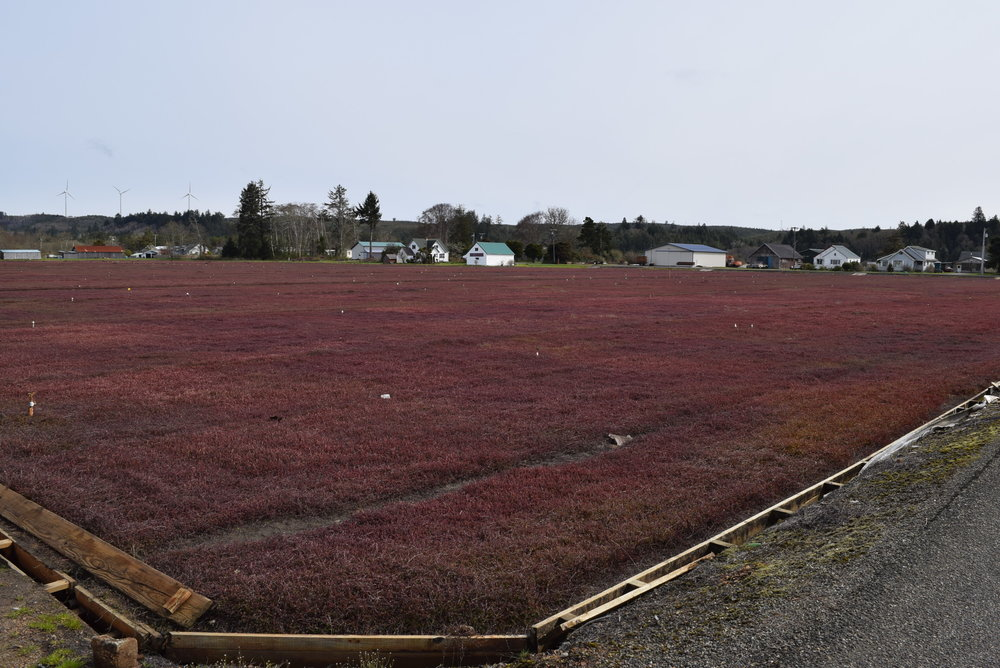 Who knew that Oceanspray had a cranberry juice plant in Washington and cranberry bogs?
