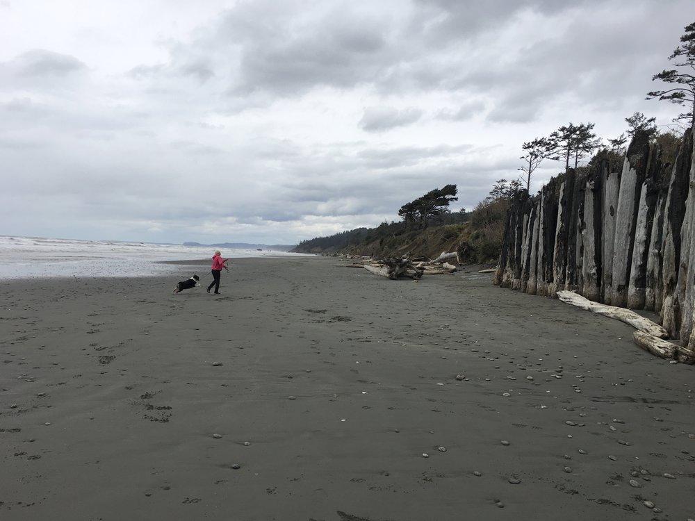 A nice driftwood covered beach.