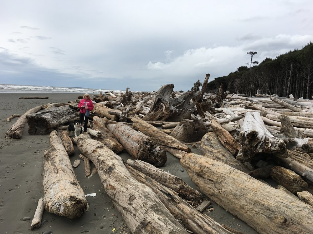 Lots of driftwood! The plaque at the campground said it washes down from river.
