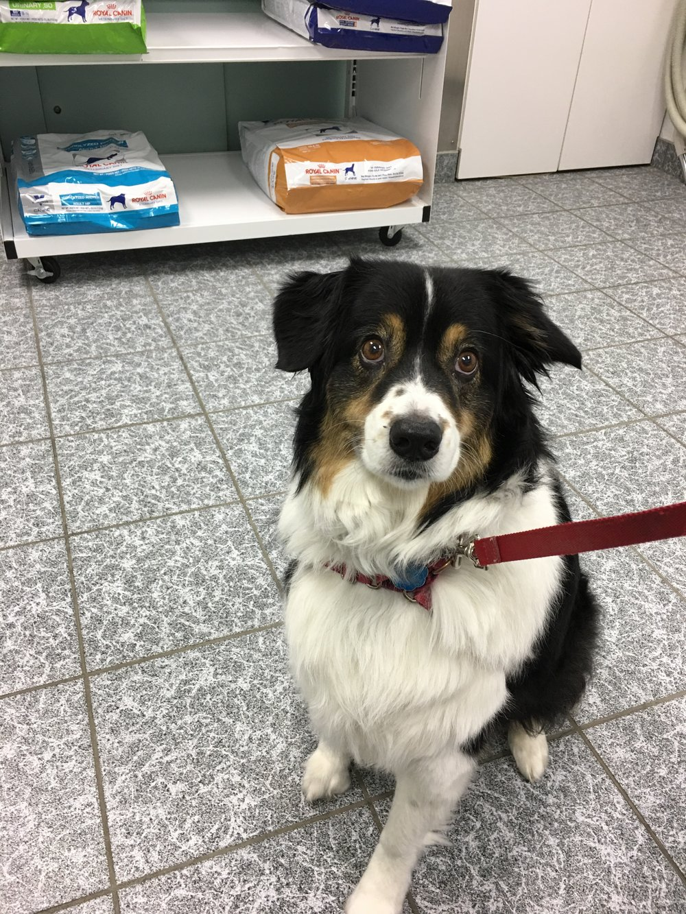 At the vet when they thought she might have kennel cough. She didn't even act sick. She had lost weight unexplainably. Now we know why. Cancer sucks!
