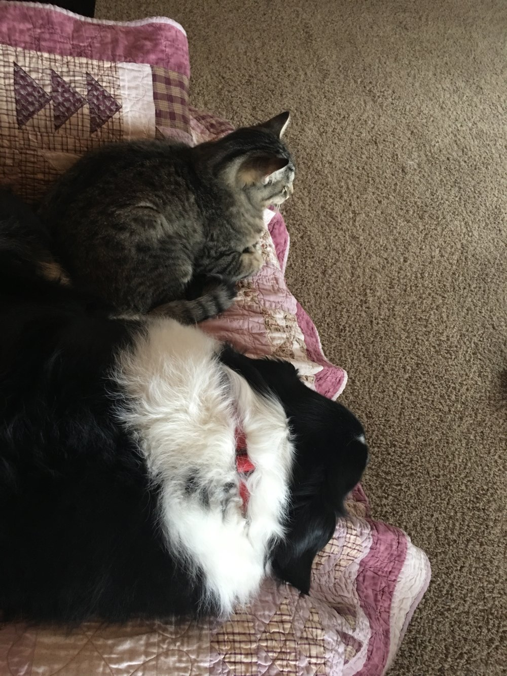 Fiona was just starting to trust him enough to sleep on the chair with him.