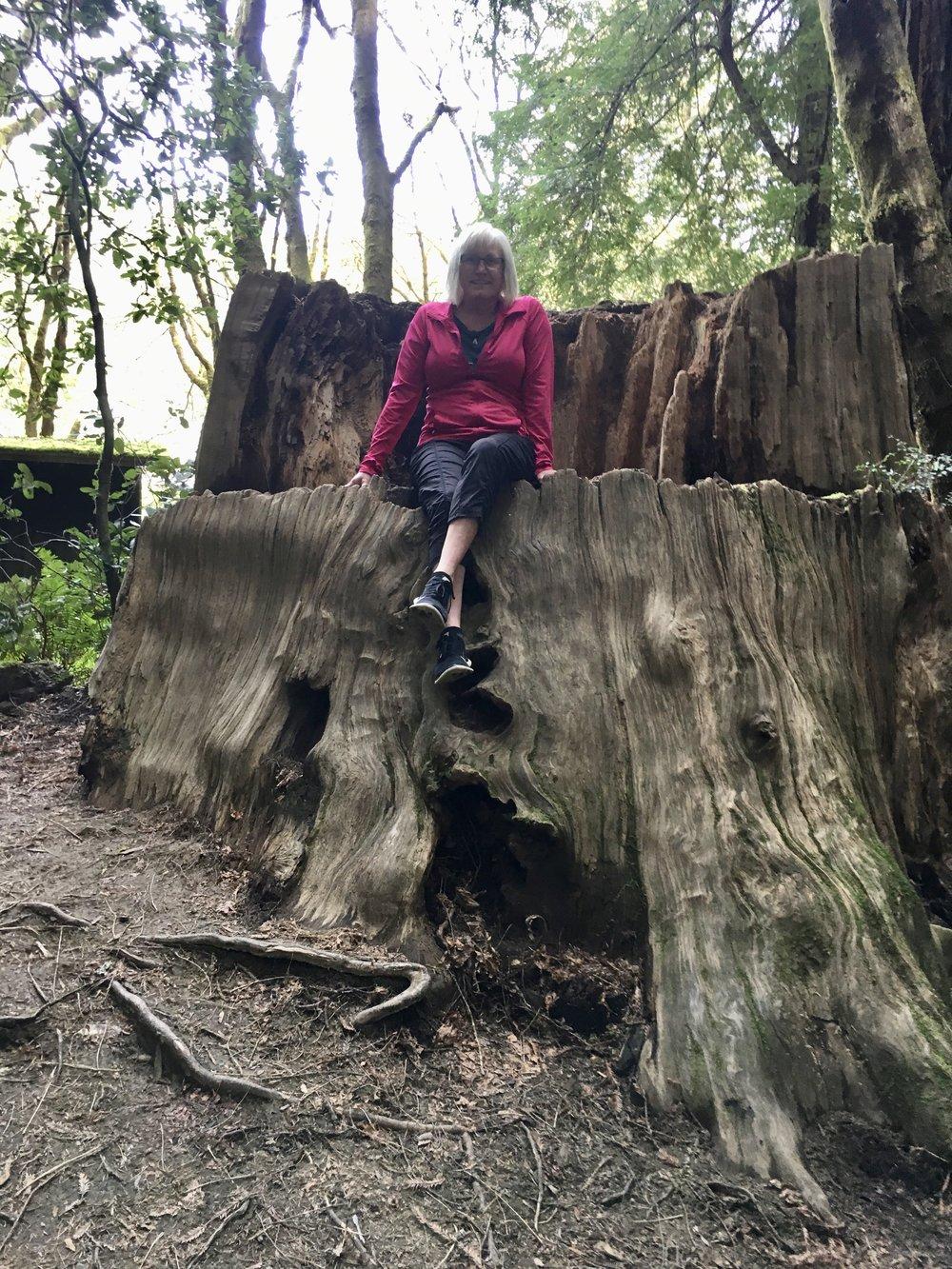 Sandy loves stumps!
