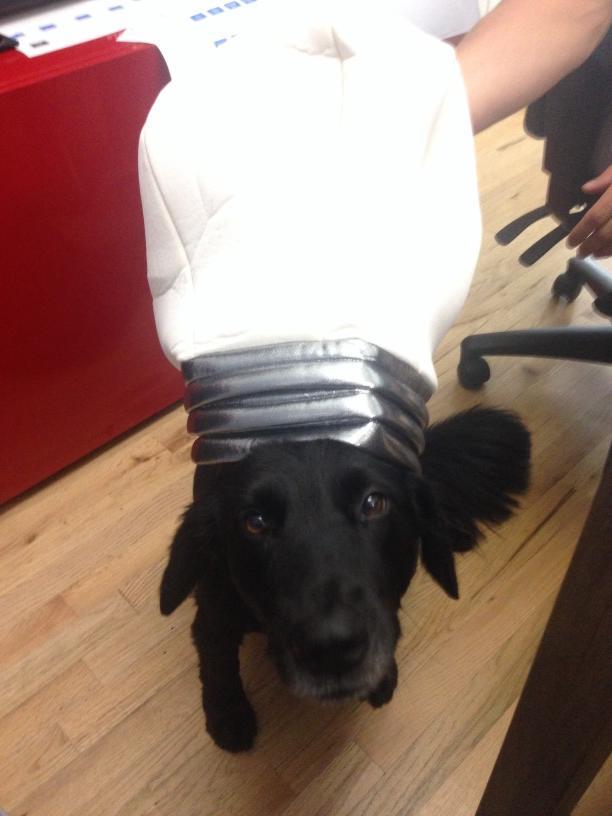 Pooch Idea Hat