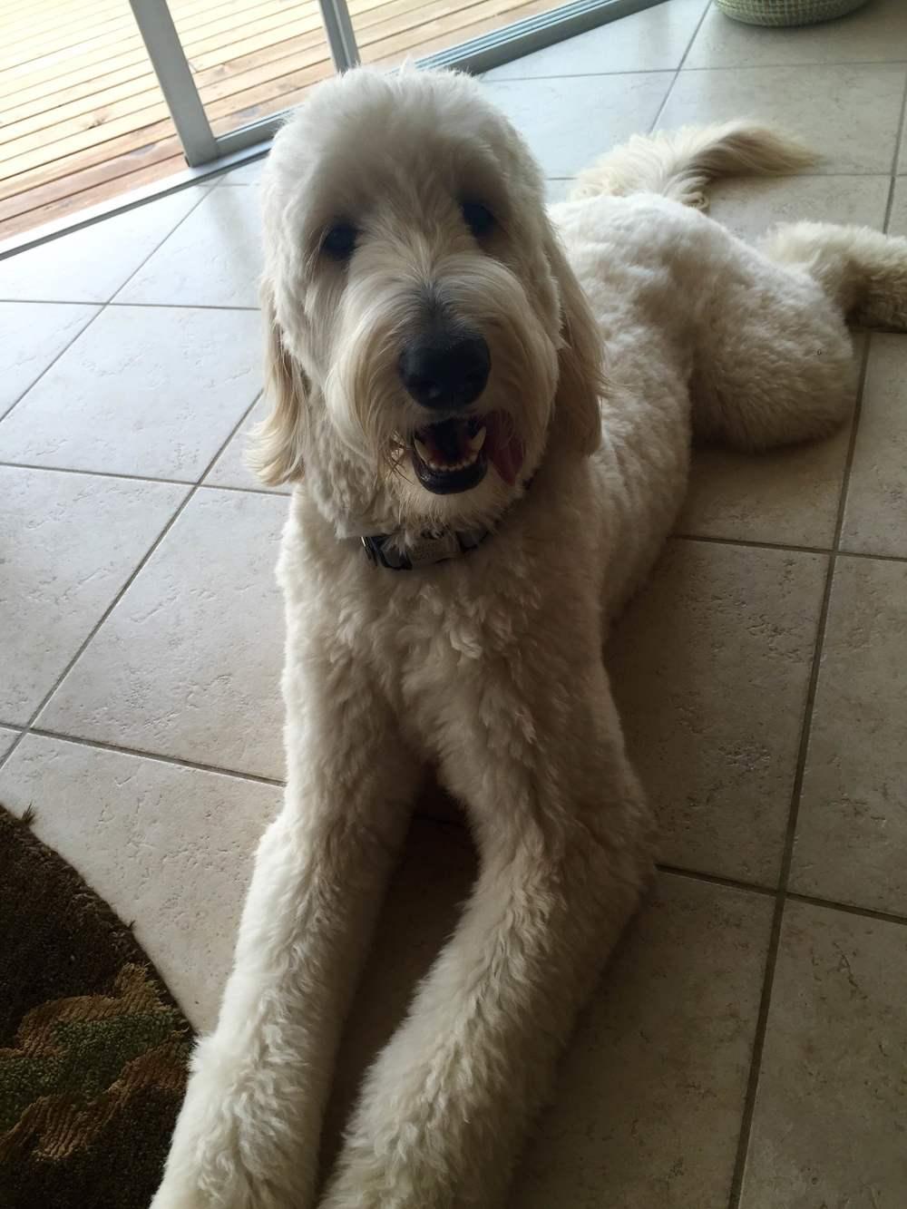 Landis' dog, Charlie Lane.