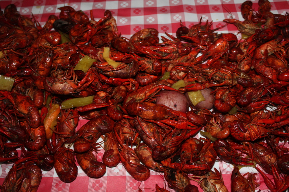 135 lbs of fresh Louisiana crawfish – boiled on-site!