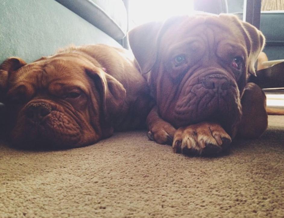 cute dogs - meet updater