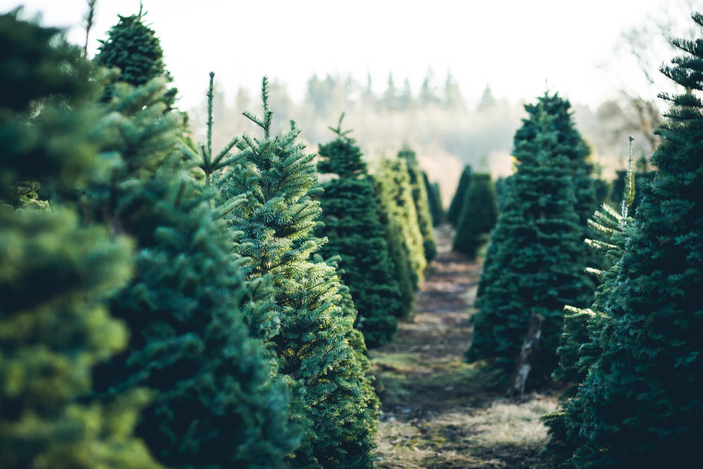christmas tree farm - properties give back holiday season