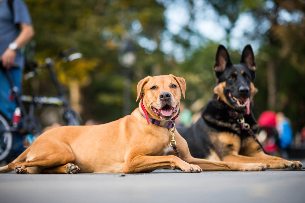 two dogs sitting - multifamily pet amenities