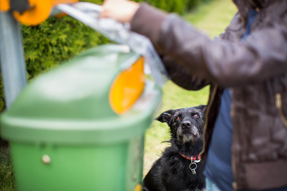 cleaning up after dog - multifamily pet amenities
